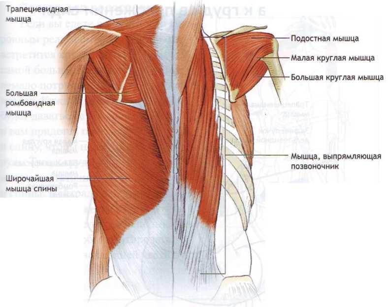 Прямой позвоночник – мышечный корсет